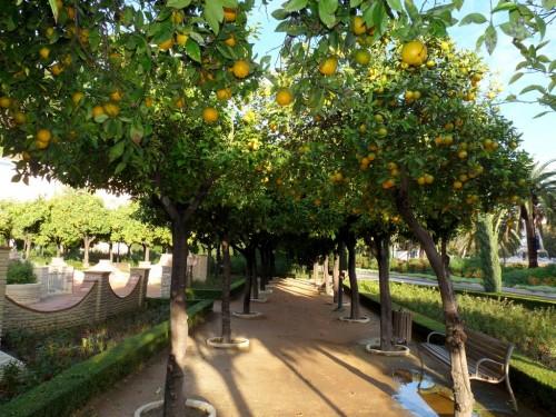 Ganz Andalusien ist voller Orangenbäume (Nicht genießbar! - Bitte lernt aus meinen Fehlern!)