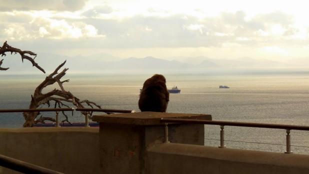 Affe mit Ausblick auf Afrika
