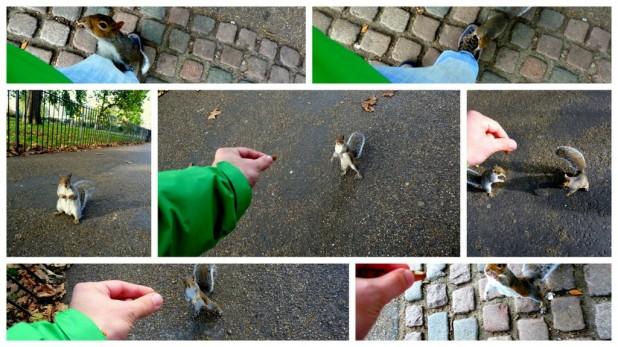 Eichhörnchen füttern im Hyde Park